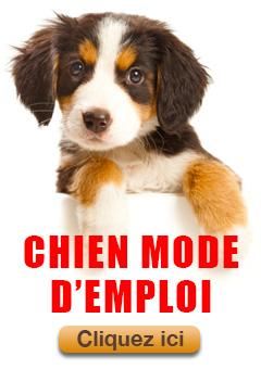 chien-mode-demploi-240x340-1.0