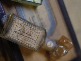 """RÉSIDENCE """"UNE HISTOIRE NATURELLE - VISITES GUIDÉES """"LE MUSÉUM DE CÉCILE GAMBINI #Montauban @ Muséum Victor Brun"""