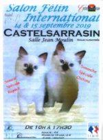 exposition-feline-castelsarrasin