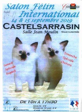 EXPOSITION FÉLINE #Castelsarrasin @ Salle Jean Moulin