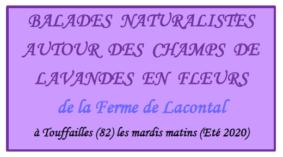 BALADES NATURALISTES AUTOUR DES CHAMPS DE LAVANDE EN FLEURS #Touffailles @ Ferme de Lacontal