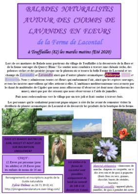 BALADES NATURALISTES AUTOUR DES CHAMPS DE PLANTES AROMATIQUES #Touffailles @ Ferme de Lacontal