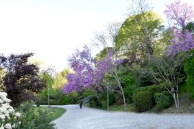 L'ARBRE CENTENAIRE AU JARDIN DES PLANTES DE MONTAUBAN #Montauban @ Jardin des plantes